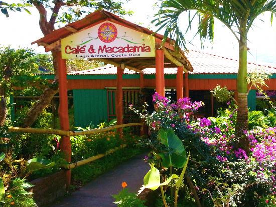 Cafe y Macadamia at Arenal-Guru